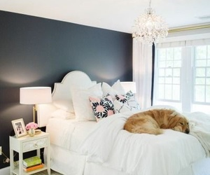 bedroom, decoration, and dog image