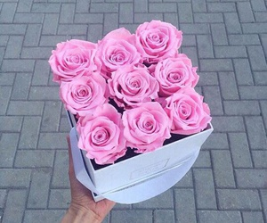 pink, roses, and cute image