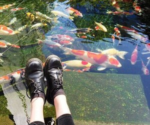 fish, shoes, and black image