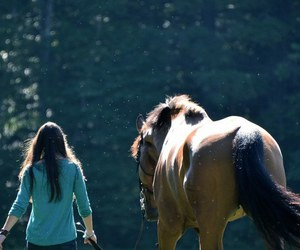 horse, girl, and photo image