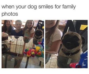 dog, funny, and family image