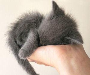 adorable, sleep, and sweet image