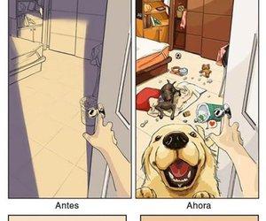 dog, life, and funny image