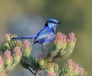 bird, blue, and colors image