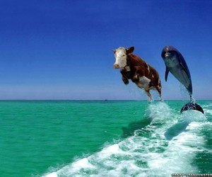 dolphin, cow, and animal image