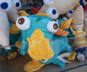 perry, photography, and phineas and ferb image