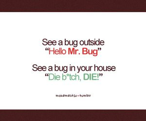 bug, funny, and haha image