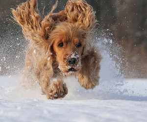 puppy, dog, and snow image