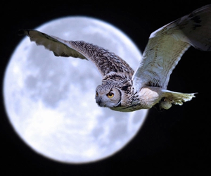 owl and moon image