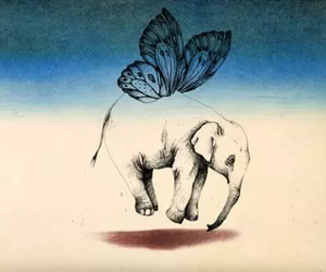 butterfly, drawing, and elephant image