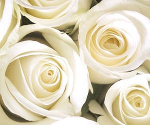 white roses image