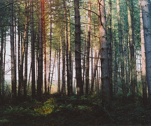 tree, forest, and nature image