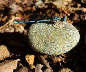 adorable, animal, and blue image
