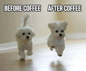 coffee and dog image
