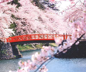 beautiful, pink, and bridge image