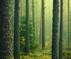 forest, trees, and nature image