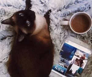 cat, coffee, and inspiration of the day image