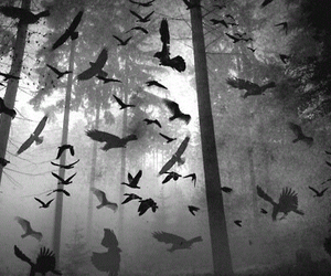 bird, forest, and dark image