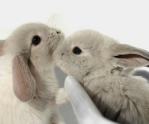 bunny, rabbit, and rabbits image