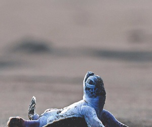 turtle, beach, and cute image