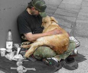 dog and homeless image