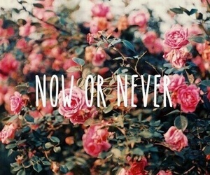 flowers, never, and now image