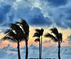 blue, palm trees, and palms image