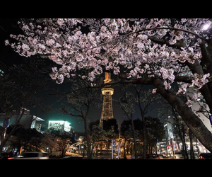 cherry blossoms, city, and japan image