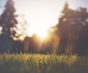 sun, grass, and nature image