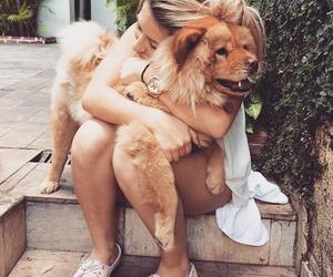 cute dog, dog, and photography image
