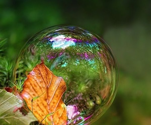 bubbles, nature, and green image