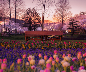 japan, flowers, and beautiful image