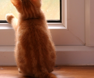 cat, window, and kitten image