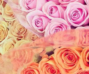 orange, rose, and pink image