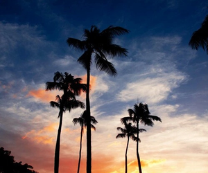 beach, sky, and palm trees image