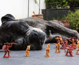 dog and toys image
