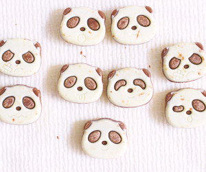 animal, food, and panda image