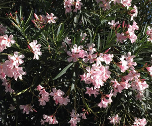 ariana grande, moonlightbae, and flowers image