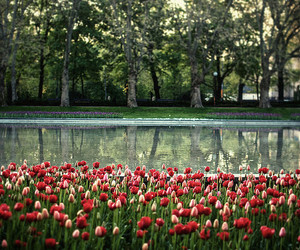 flowers, nature, and pond image
