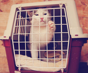adorable, cat, and cage image