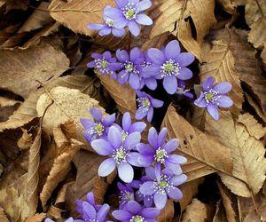 flores image