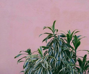 pink and plants image