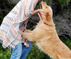 beautiful, dog, and idol image