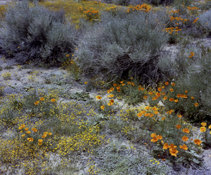 flowers, nature photography, and scrubland image