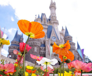 flowers, disney, and photography image