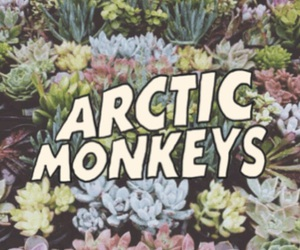flowers, arctic monkeys, and wallpaper image
