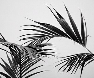 plants, black and white, and nature image