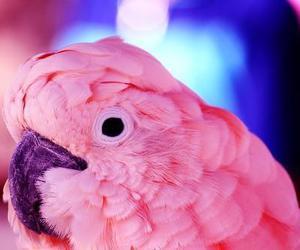 bird and pink image