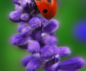 flowers, nature, and insect image