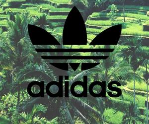 adidas, green, and wallpaper image